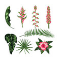 set flower and natural leaves plants vector image vector image