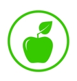 apple with green leaf vector image