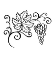 Beautiful Branch of Grapes vector image vector image