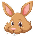 bunny face on white background vector image