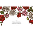 floral design with colored roses vector image vector image
