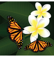 frangipani and butterflies vector image