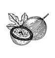 passion fruit engraving vector image vector image