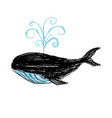 whale hand painted vector image