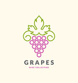 Concept grapes logo vector image vector image