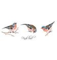 finch bird set vector image