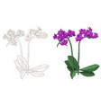 purple phalaenopsis orchid colored and outline vector image vector image