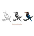drawing of white-throated kingfisher bird hold on vector image vector image