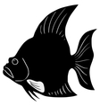 Silhouette of spadefish vector image vector image
