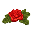 beautiful red rose and leaves isolated on white vector image vector image