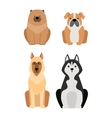 Different dogs breed isolated on white vector image