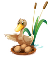 A duck watching the eggs at the nest near the pond vector image vector image
