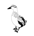 black and white duck vector image