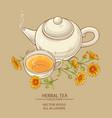 calendula tea vector image vector image