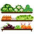 group of vegetables on shelf vector image vector image