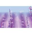 Lavendar Flowers vector image