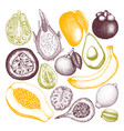 collection tropical fruits vector image
