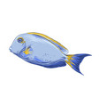 hand drawn sketch fish in color isolated on vector image