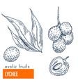 lychee hand drawn vector image vector image
