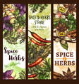 sketch spices and herbs store banners vector image vector image