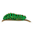 motley green caterpillar creeps along the branch vector image