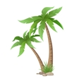 two palms tree isolated vector image