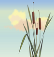 cane and small insects vector image vector image