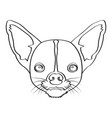 isolated chihuahua avatar vector image vector image