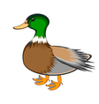 A duck on a white background vector image vector image