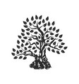 organic natural and healthy olive tree silhouette vector image vector image