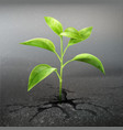 plant sprout through asphalt vector image