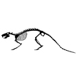 Rat skeleton vector image vector image