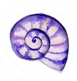 Watercolor Seashell vector image vector image