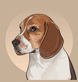 cartoon dog head dog of the beagle breed vector image