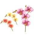 orchid flowers vector image