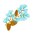 christmas branch of pine with cones vector image