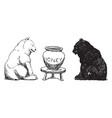 bears 2 vintage