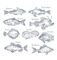 set isolated river and ocean fish sketches vector image