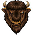 bison head mascot vector image vector image