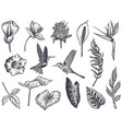 collection tropical flowers hummingbird vector image vector image