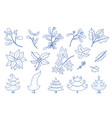 evergreen christmas plant collection doodle style vector image vector image