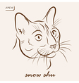 Snow shu cat vector image vector image