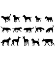 dogs collection vector image