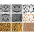 animal skins vector image vector image