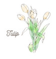 beautiful tulip on white background vector image vector image
