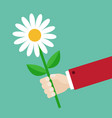 businessman hand holding white daisy flower vector image