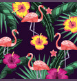 flowers with flamingos and leaves plants vector image vector image