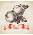 Hand drawn sketch fruit apricot Eco food vector image vector image