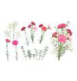 set carnation flowers vector image vector image