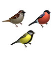 set of 3 birds - sparrow tit and bullfinch vector image